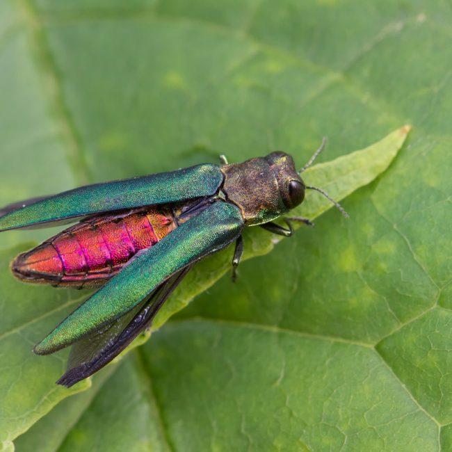 symbiose insectes nuisibles environnement trois