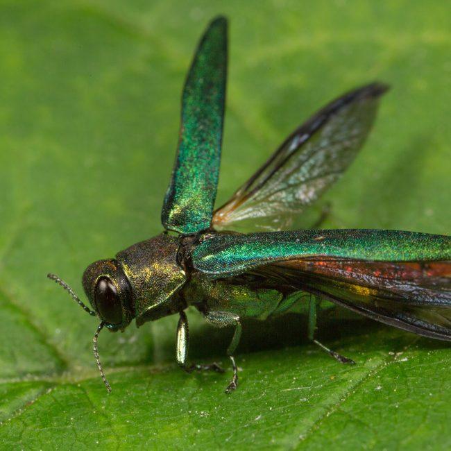 symbiose insectes nuisibles environnement deux