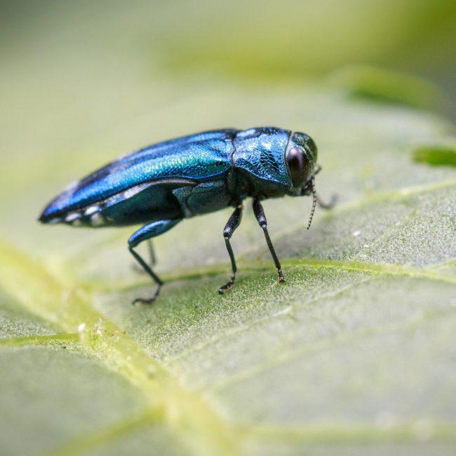 symbiose insectes nuisibles environnement un